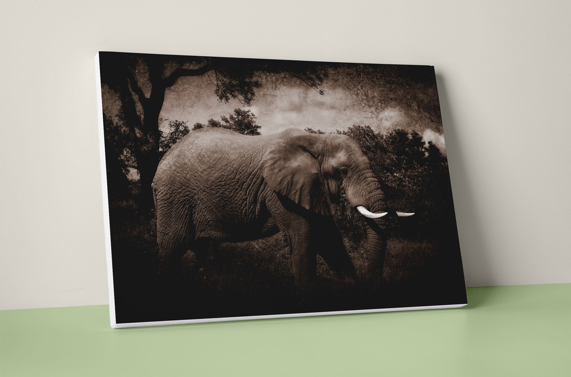 elephant canvas wall art print