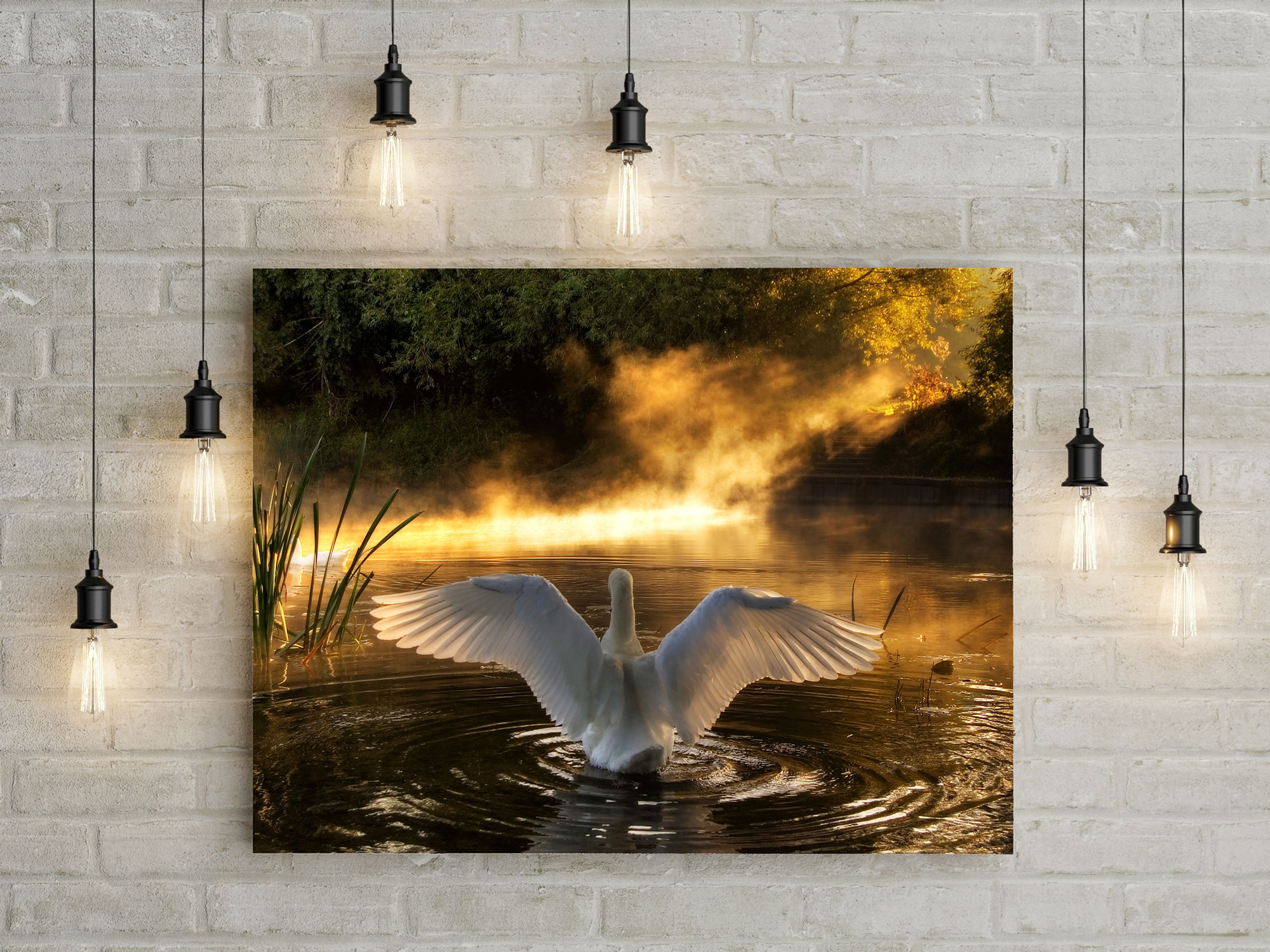 rising swan canvas wall art picture